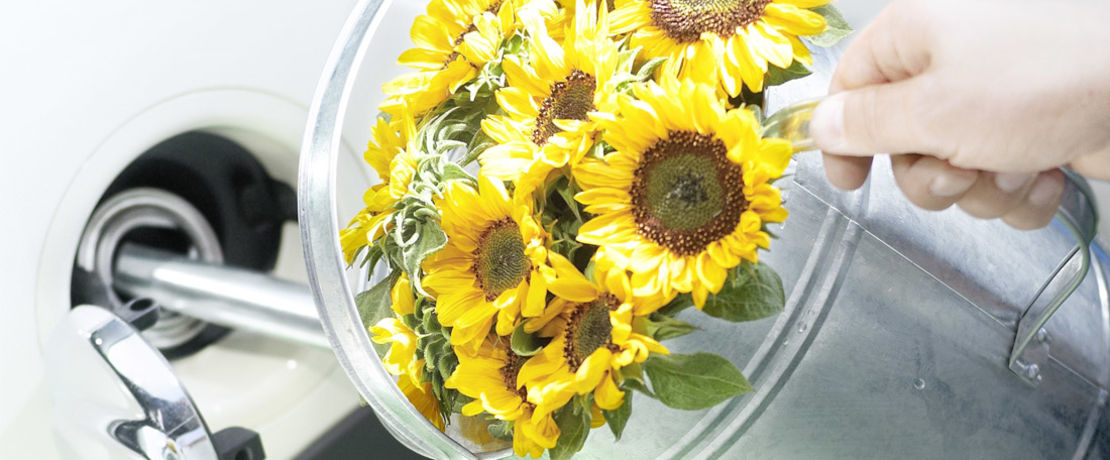 watering can with sunflowers inside put into fuel tank of a white car